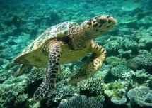 01 Turtle Encounter